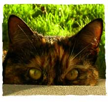 Molly-Eyes